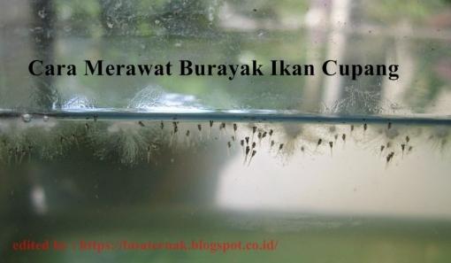 FOTO BURAYAK