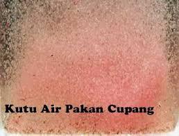 KUTU AIR